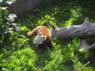 siam herning Zoopark næstved