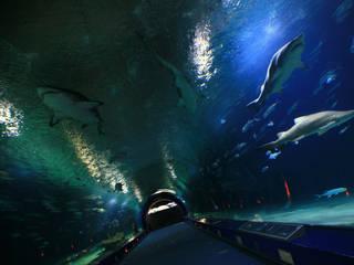 Oceanogr fic acuario en valencia parkscout de for Oceanografic telefono